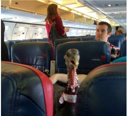 Turkey on a Plane